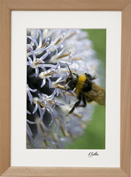 Print in natural wood frame