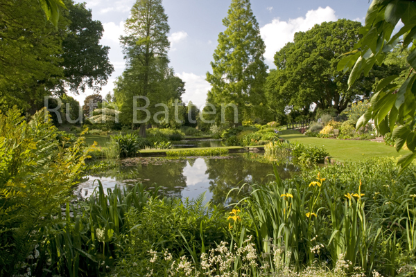 Beth Chatto Gardens, The Water Garden, Essex - N16